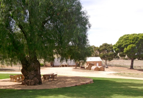 View of the pepper tree